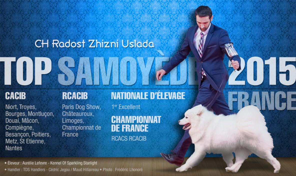 Top Samoyède 2015